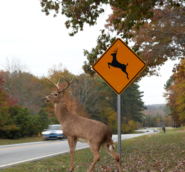 Image of JOINT PRESS RELEASE - Ohio Heads Into Peak Time For Deer-Related Crashes